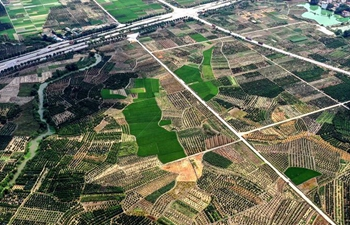 Aerial view of tangerine orchards in Nanning, China's Guangxi
