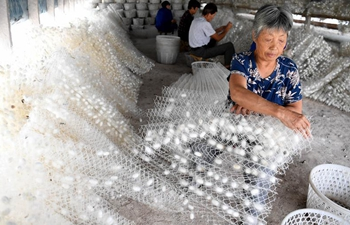Mulberry and silkworm cultivation increases income of farmers in E China's Anhui