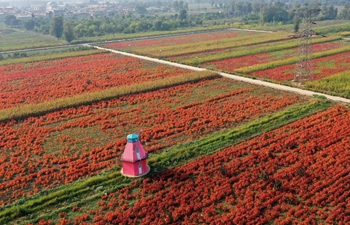 Flowers and plants planting industry creates jobs, boosts tourism in China's Shanxi