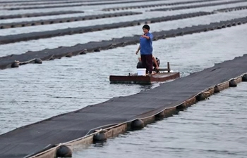 Young couple's turbot fish business creates job opportunities in Liaoning