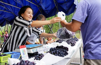 Grape plantation helps households get rid of poverty in Laoaozhuang Village, China's Shaanxi