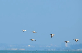 Migratory birds head southward as temperature drops in north China