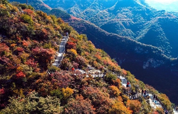 In pics: Taihang Mountain layered with red leaves in N China's Hebei
