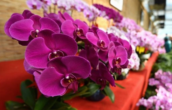 Local gov't of Hebei's Gu'an County explores flower economy to boost rural economy