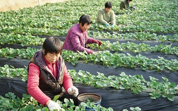 Cultivation of off-season farm produce boosts local farmers' income