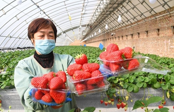 In pics: staff members work in greenhouse of plantation