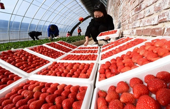Farmers work in greenhouse at agricultural garden in Luanzhou City, Hebei