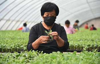 Employees work at seedling greenhouse in Hebei