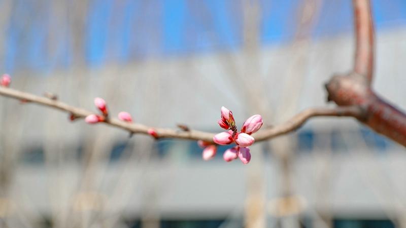 【高清大图】雄安的春天,真美啊!