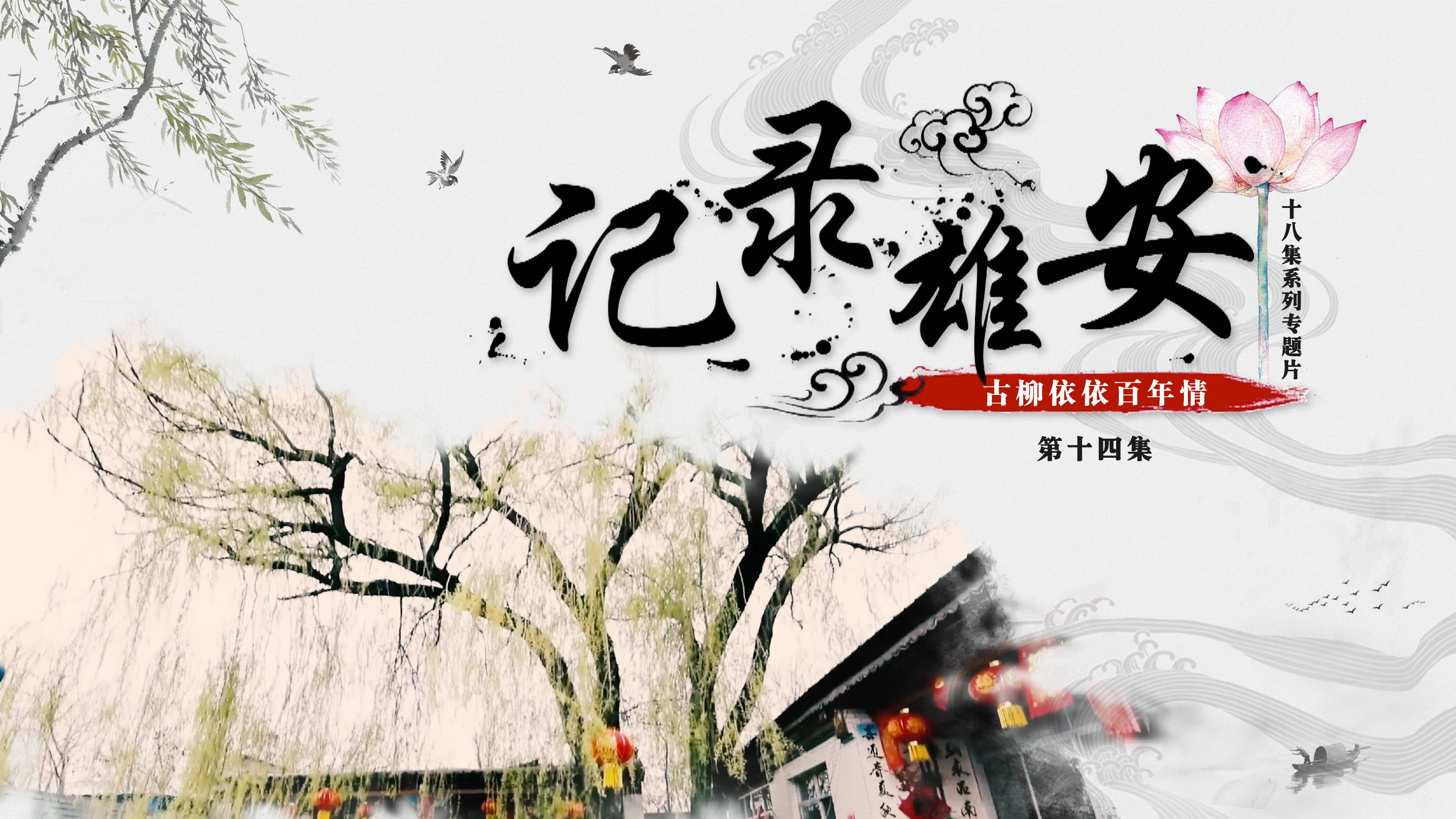 《记录雄安》第十四集:古柳依依百年情