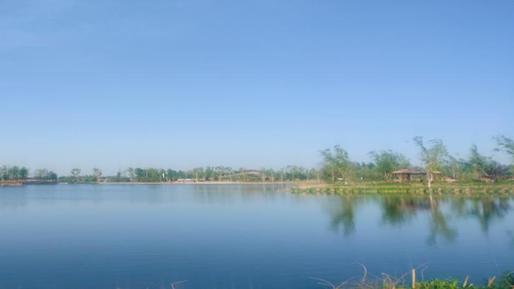 """春将远,夏将至,天鹅湖公园""""网红""""夫妇添宝宝"""