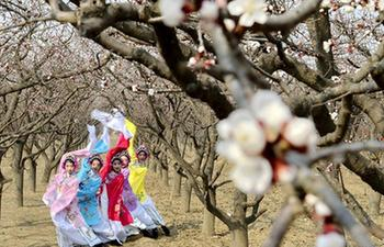 Spring scenery in Julu County, N China's Hebei