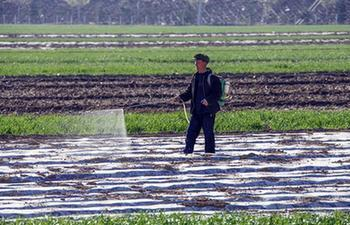 Farmers busy with farm work in N China's Hebei