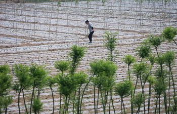 "In pics: farmers work on day of ""lixia"" across China"