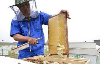 In pics: working in honey company in north China's Hebei