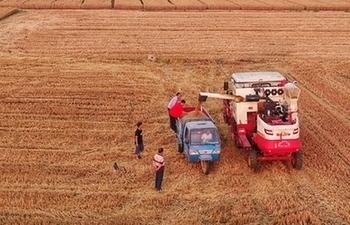 Xiongan greets harvest season