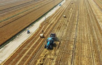 Farmers pack wheat straw as materials for power plants in N China's Hebei