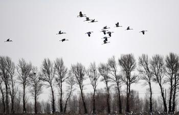 China's wetland area ranks 4th in the world
