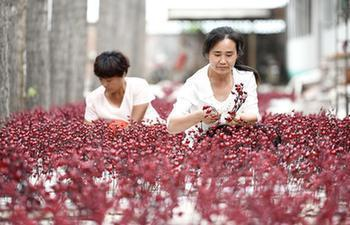 Silk fabric flower handicraft industry helps increase personal income in China's Hebei