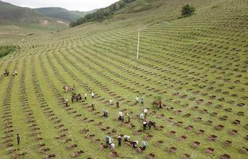 Workers promote ecological protection through afforestation in N China's Hebei