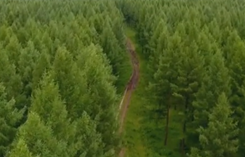 From desert to forest! An amazing story of China's green push