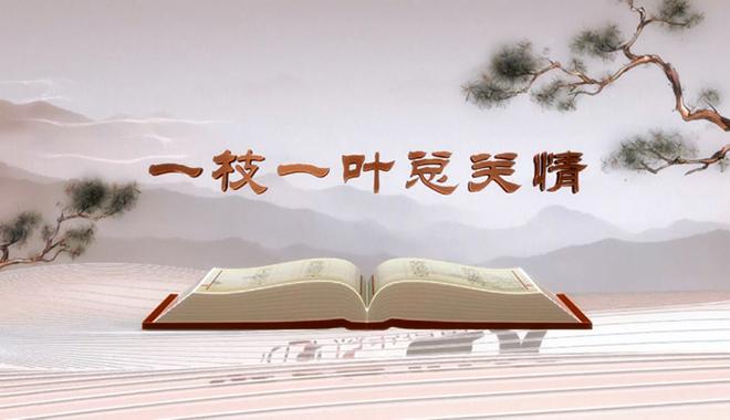 """《平""""语""""近人——习近平总书记用典》第一集:一枝一叶总关情"""