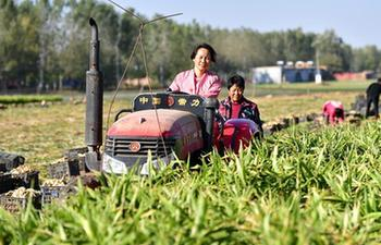 Special planting industries help farmer increase incomes in Hebei